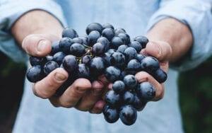 Wat is biologische wijn?